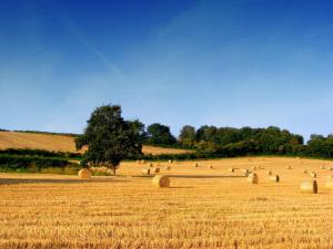 Agricoltura, exploit di assunzioni